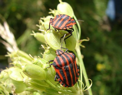 insectes2
